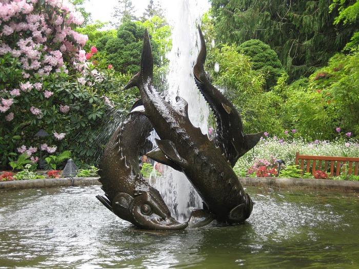 Сады Бучартов на острове Ванкувер. The Butchart Gardens. 70577