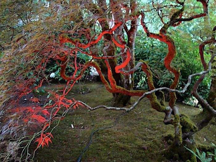 Сады Бучартов на острове Ванкувер. The Butchart Gardens. 53041
