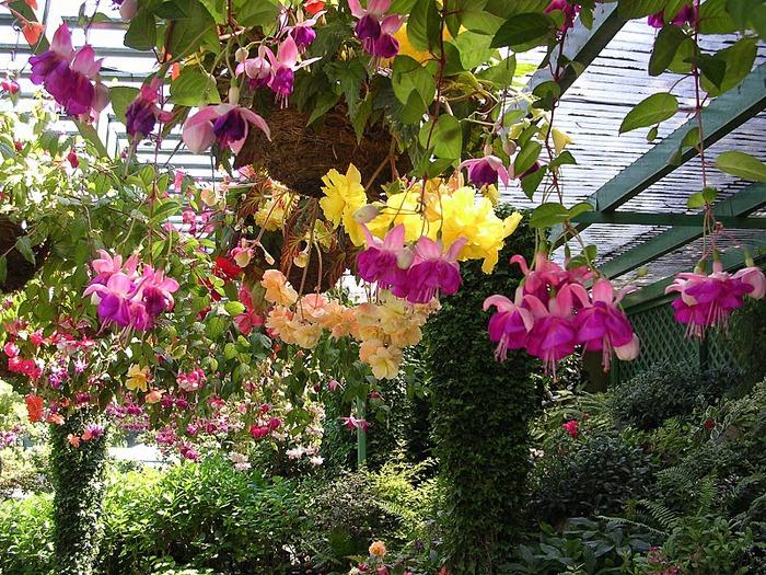 Сады Бучартов на острове Ванкувер. The Butchart Gardens. 44718