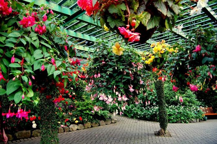 Сады Бучартов на острове Ванкувер. The Butchart Gardens. 33337