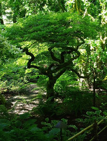Сады Бучартов на острове Ванкувер. The Butchart Gardens. 56870