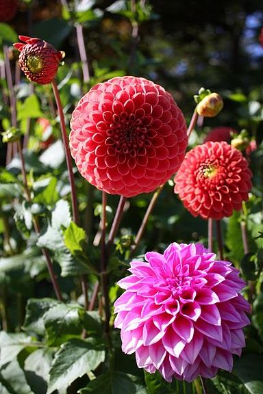 Сады Бучартов на острове Ванкувер. The Butchart Gardens. 55389