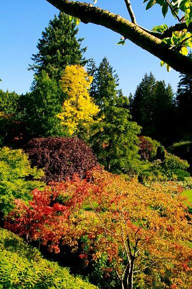Сады Бучартов на острове Ванкувер. The Butchart Gardens. 67379