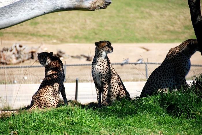 Парк Диких Животных (Wild Animal Park), San Diego 50336