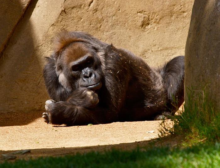 Парк Диких Животных (Wild Animal Park), San Diego 75508