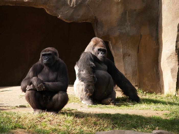 Парк Диких Животных (Wild Animal Park), San Diego 85310