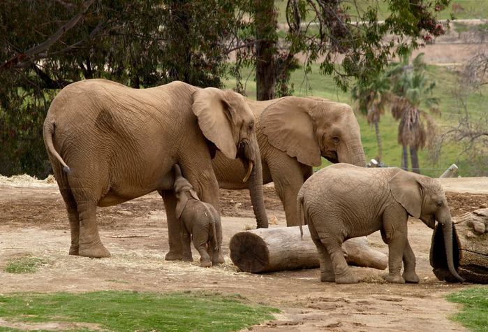 Парк Диких Животных (Wild Animal Park), San Diego 41356