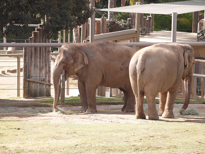 Парк Диких Животных (Wild Animal Park), San Diego 88071
