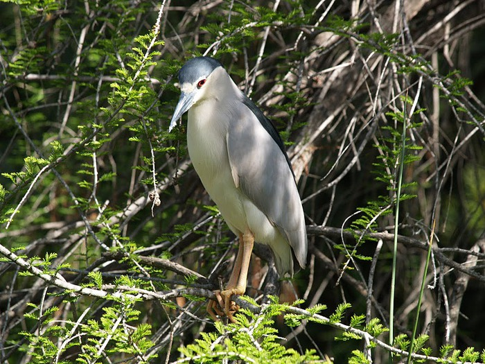 Парк Диких Животных (Wild Animal Park), San Diego 44151