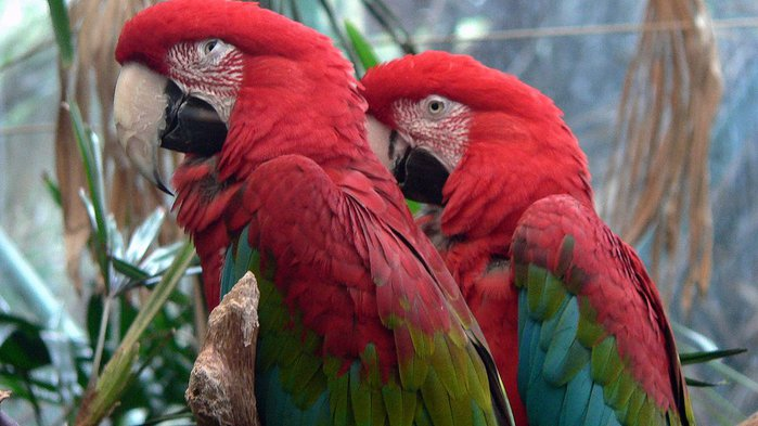 Парк Диких Животных (Wild Animal Park), San Diego 47987