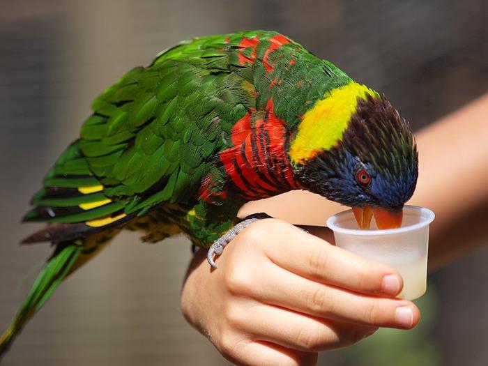 Парк Диких Животных (Wild Animal Park), San Diego 55154