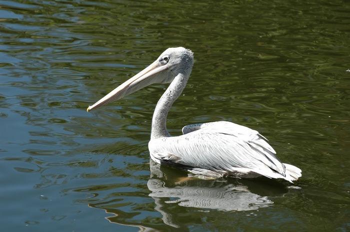 Парк Диких Животных (Wild Animal Park), San Diego 84665