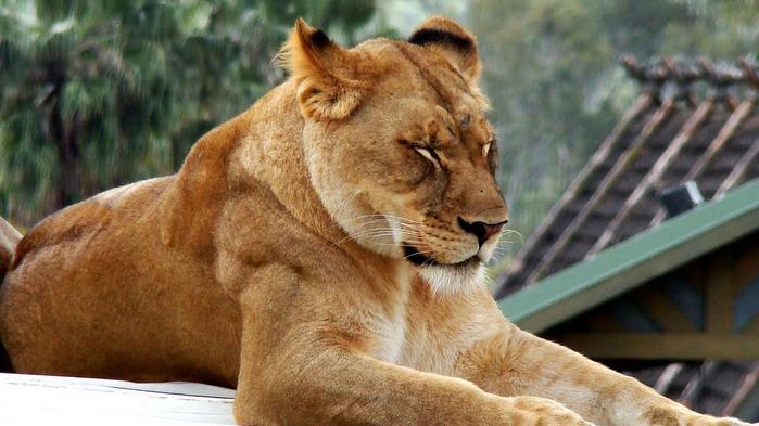 Парк Диких Животных (Wild Animal Park), San Diego 49208