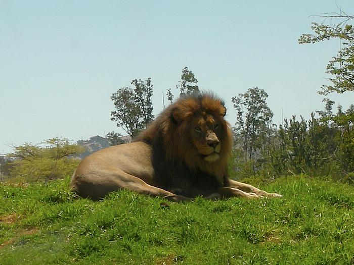 Парк Диких Животных (Wild Animal Park), San Diego 87869