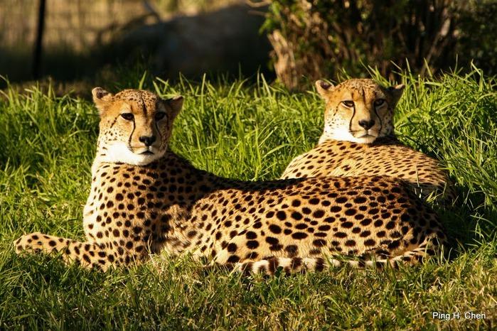 Парк Диких Животных (Wild Animal Park), San Diego 13885
