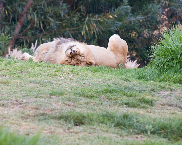 Парк Диких Животных (Wild Animal Park), San Diego 21508