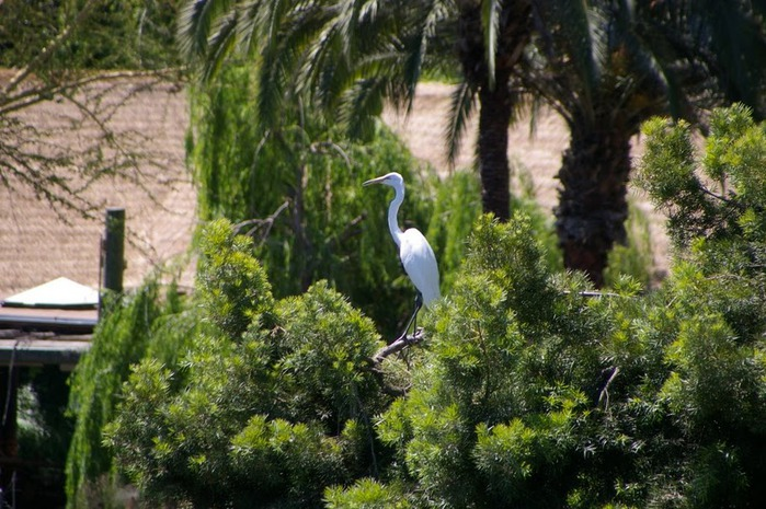 Парк Диких Животных (Wild Animal Park), San Diego 99316