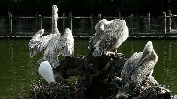 Парк Диких Животных (Wild Animal Park), San Diego 17361