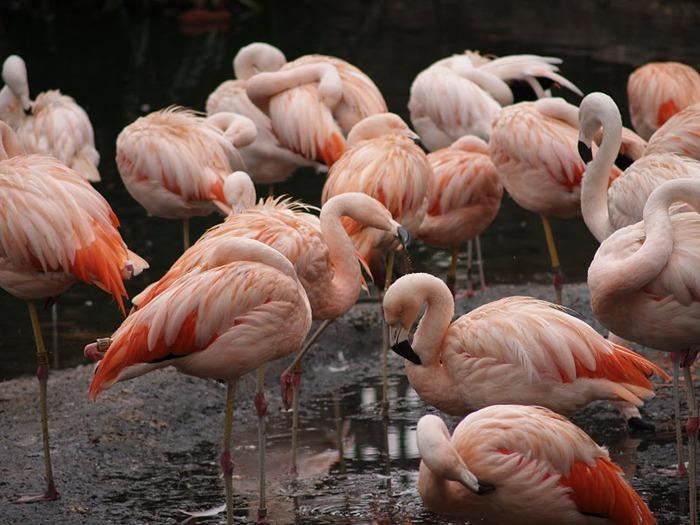 Парк Диких Животных (Wild Animal Park), San Diego 23482