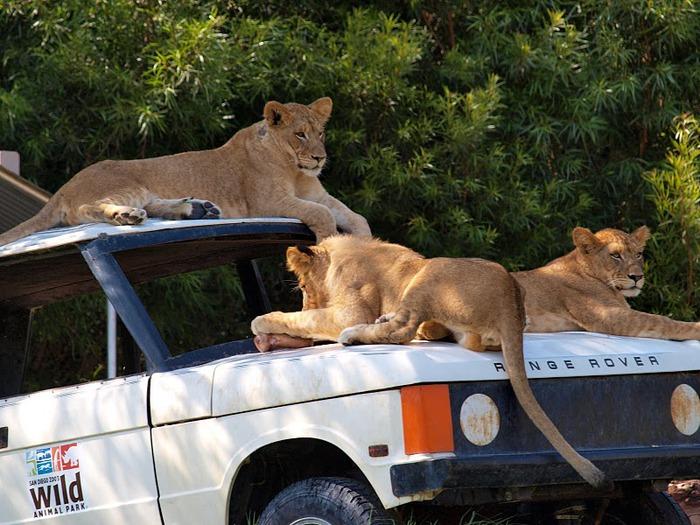 Парк Диких Животных (Wild Animal Park), San Diego 20482