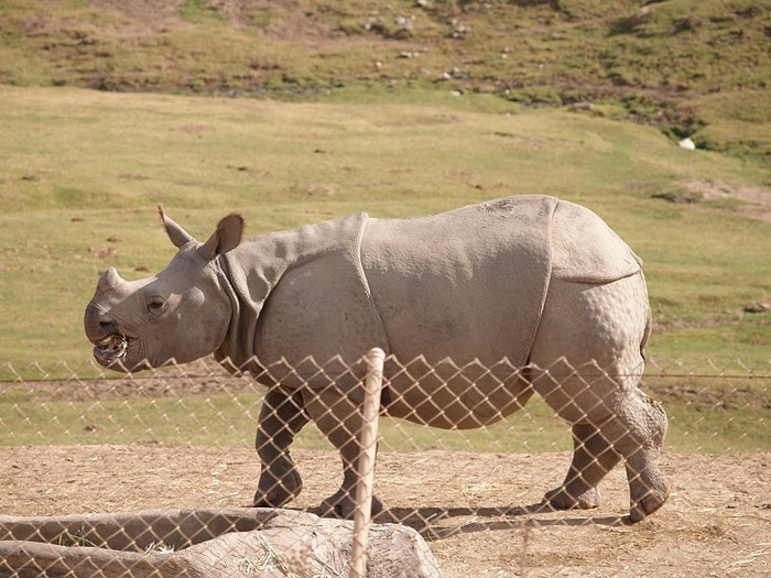 Парк Диких Животных (Wild Animal Park), San Diego 51549