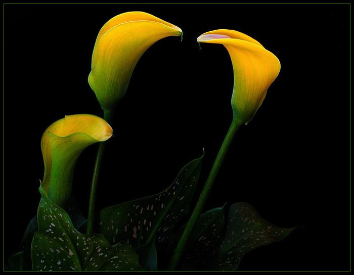Фото цветов на черном фоне