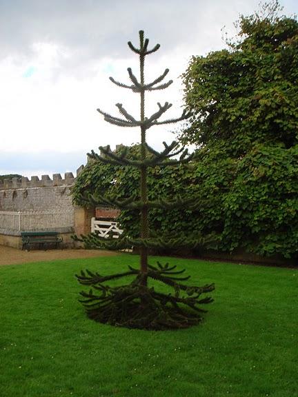 Замок Белси (Belsay Castle) 75347