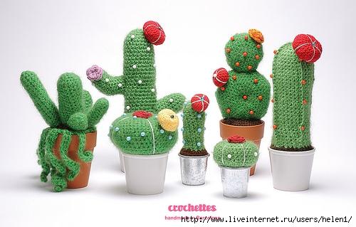 -kaktusy/#more-4893