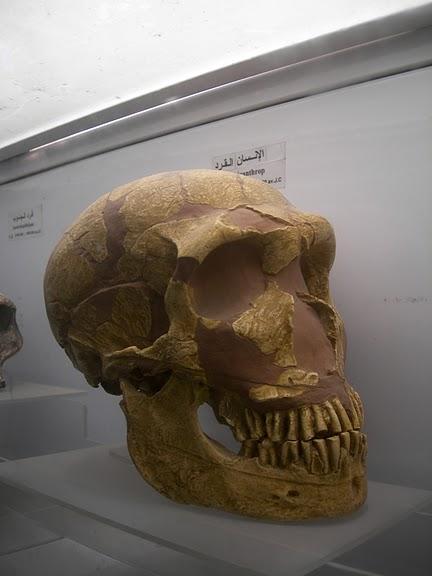 Le musee national du Bardo / Музей Бардо (Тунис) 58098