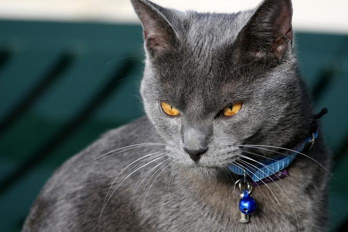 Кошка 15501