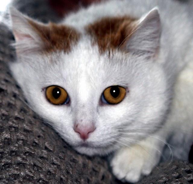 Кошка 14137