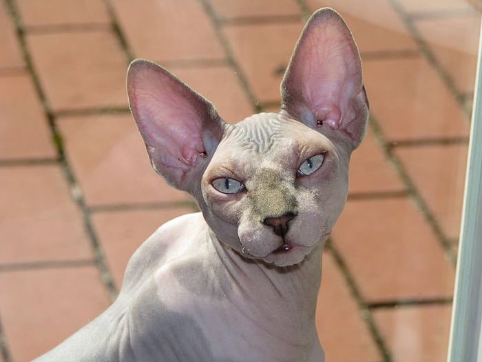 Кошка 59272