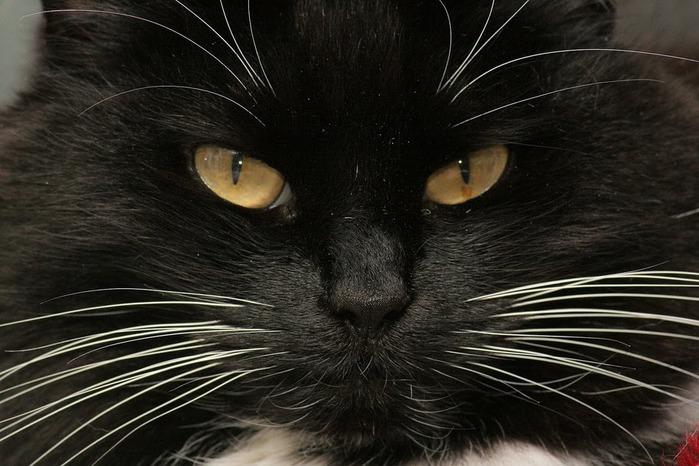 Кошка 97244