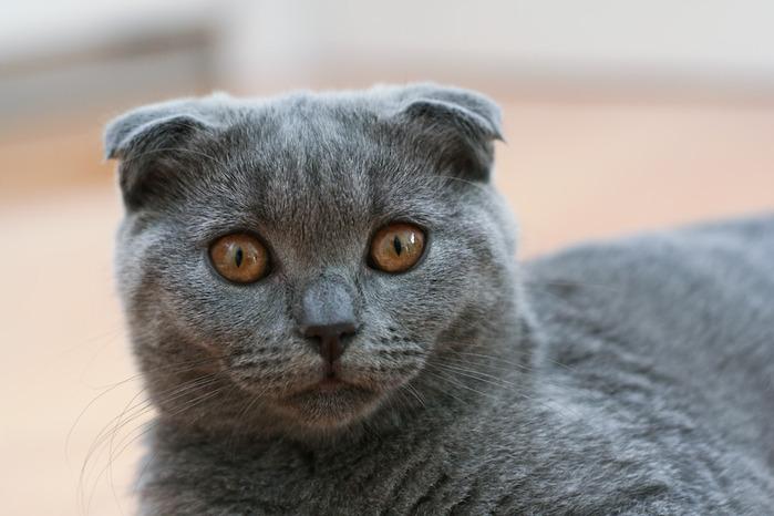 Кошка 37888