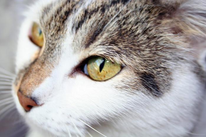 Кошка 44571