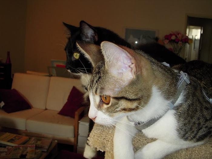 Кошка 66967