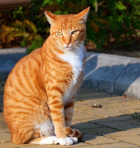 Кошка-2 31227