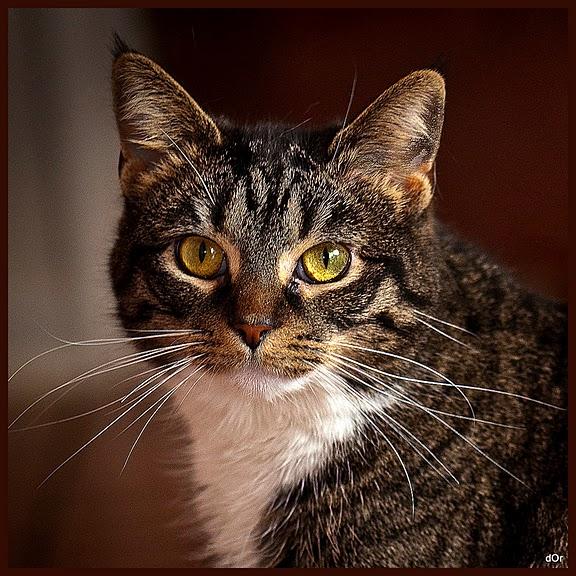 Кошка-2 45725