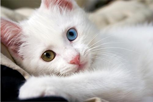 Кошка-2 59763