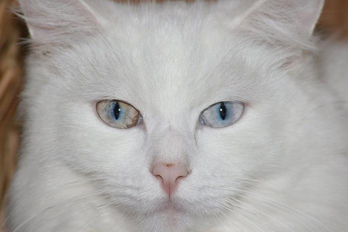 Кошка-2 42548