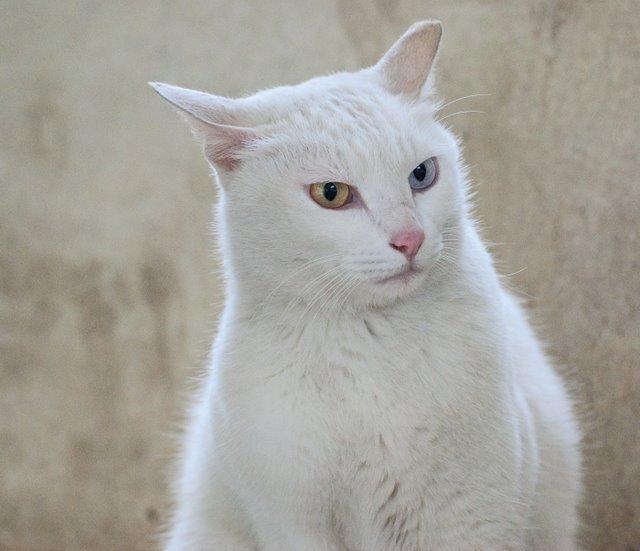 Кошка-2 56433