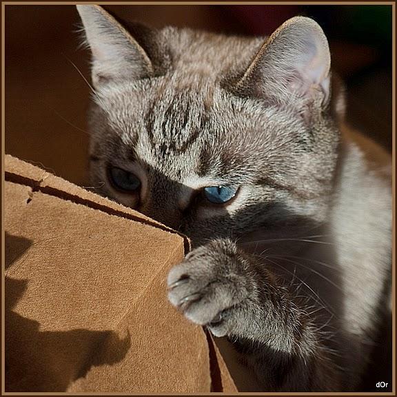 Кошка-2 81794