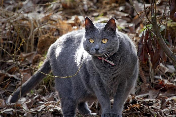 Кошка-2 21892