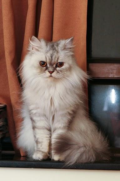 Кошка-2 73365