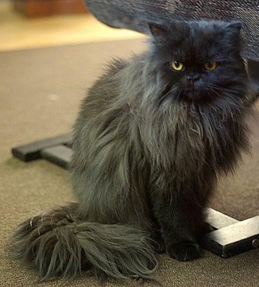 Кошка-2 89371