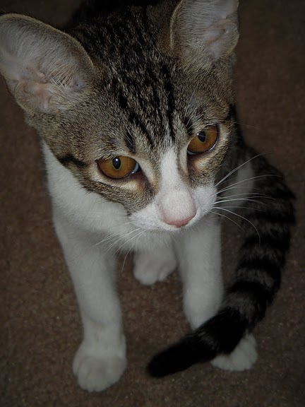 Кошка-2 60371