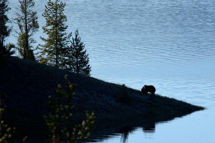 Национальный Парк Йеллоустоуна (Yellowstone National Park) 88206