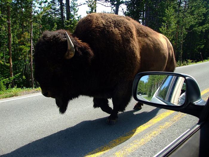 Национальный Парк Йеллоустоуна (Yellowstone National Park) 82354