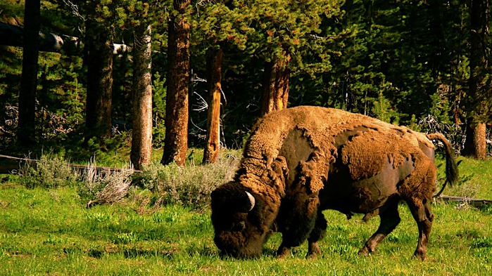 Национальный Парк Йеллоустоуна (Yellowstone National Park) 93125