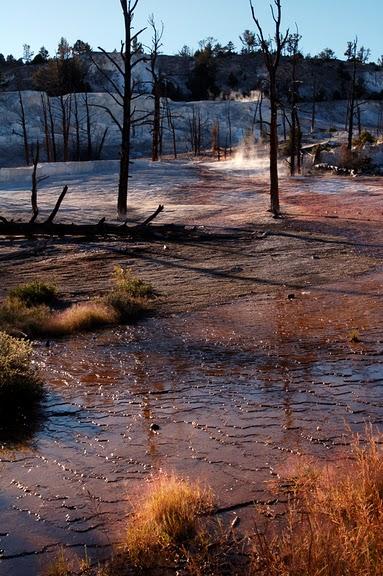 Национальный Парк Йеллоустоуна (Yellowstone National Park) 52707